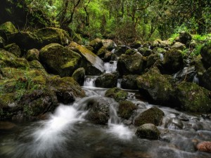 Postal: Pequeñas cascadas entre las rocas