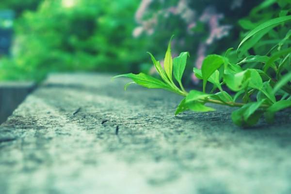 Planta sobre la carretera