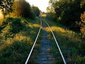 Una larga vía de tren entre árboles y plantas