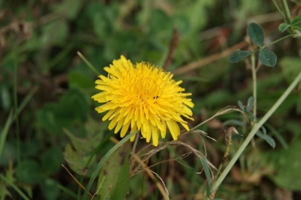 Una solitaria flor silvestre amarilla