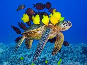Peces de colores sobre una tortuga marina