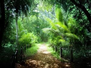 Una senda rodeada de espectaculares arbustos y árboles