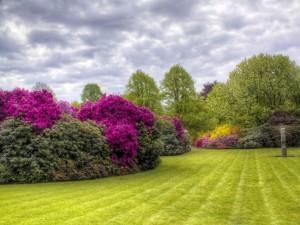 Jardín con espléndidas azaleas y árboles
