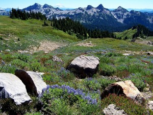 Maravilloso paisaje primaveral en las montañas