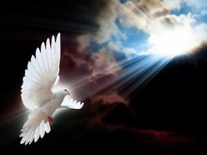 Postal: Una blanca paloma iluminada por los rayos del sol