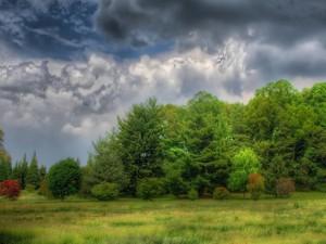 Nubes grises sobre los árboles verdes