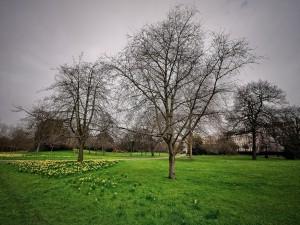 Árboles sin hojas sobre la hierba verde