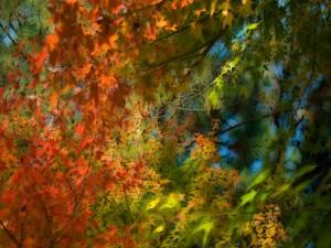 Hojas de varios colores en las ramas
