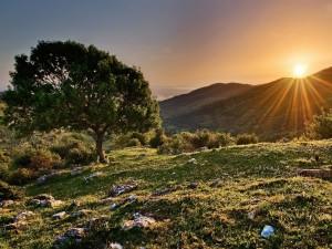 Postal: Los rayos del sol iluminan el campo