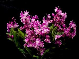 Postal: Sensacional ramo de orquídeas
