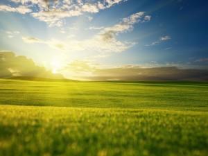 El sol iluminando la verde hierba