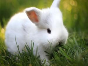 Un pequeño conejo blanco en la hierba