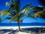 La sombra de las palmeras en la arena de la playa