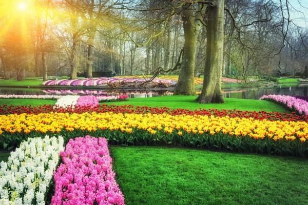 Jacintos y tulipanes en un cuidado jardín