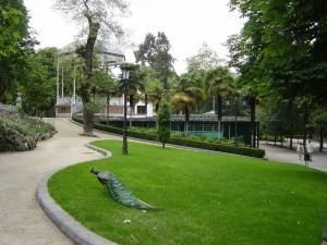 Postal: Pavo real en el Campo de San Francisco (Oviedo, Asturias)