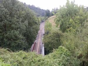 Vía de tren entre grandes árboles