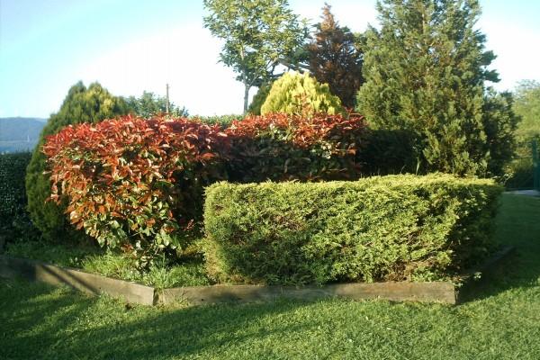 Árboles y arbustos en un jardín