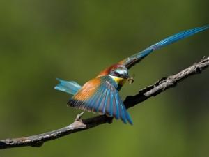 Colorido pájaro con un insecto en el pico