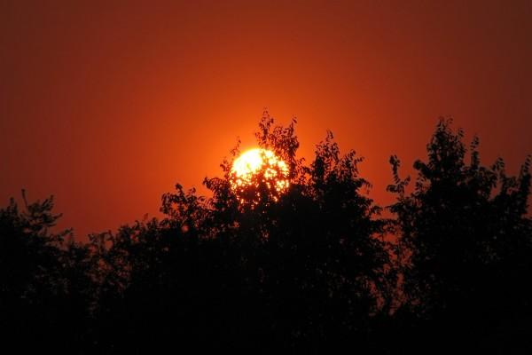 Gran sol al atardecer tras los árboles