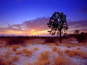Postal: Un árbol en el desierto