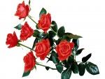 Rosas con largos tallos y verdes hojas