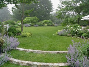 Hermoso jardín con plantas y flores