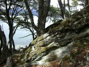 Postal: Vista entre los árboles de la Bahía Lapataia (Parque Nacional Tierra del Fuego, Argentina)