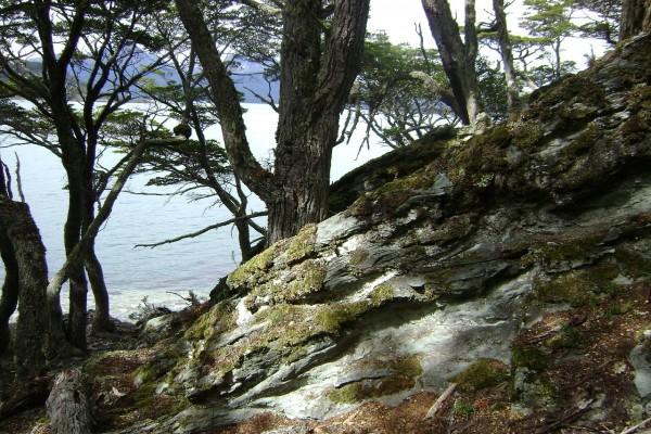 Vista entre los árboles de la Bahía Lapataia (Parque Nacional Tierra del Fuego, Argentina)