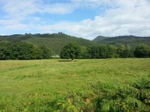 Postal: Árboles en un prado