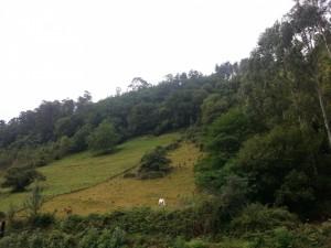 Postal: Caballos pastando en un claro del bosque