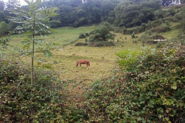 Caballo marrón en el pasto