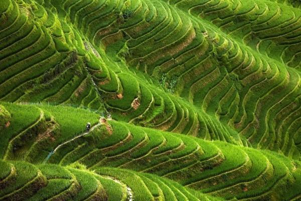 Cultivos en las montañas