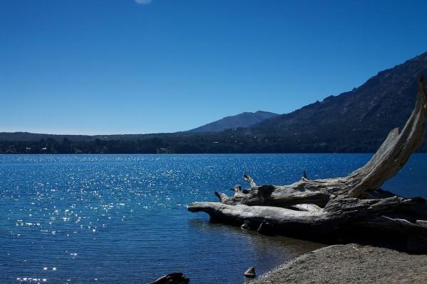 Un tronco en las aguas del lago Gutiérrez (Bariloche, Argentina)