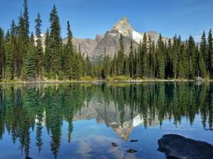 Montañas y pinos reflejados en el agua del lago