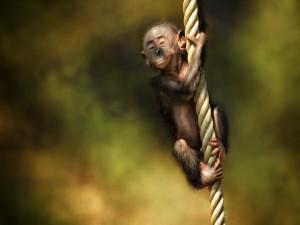 Postal: Un pequeño mono disfrutando sobre una cuerda