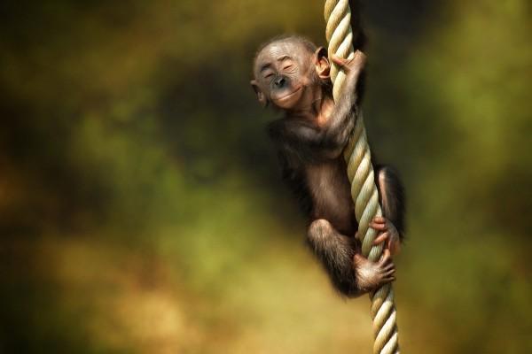 Un pequeño mono disfrutando sobre una cuerda
