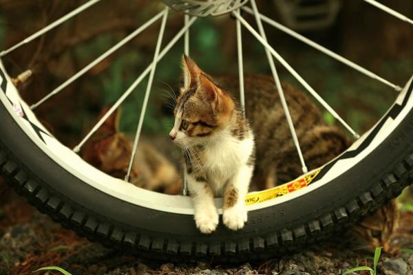 Un gatito en una rueda de bicicleta