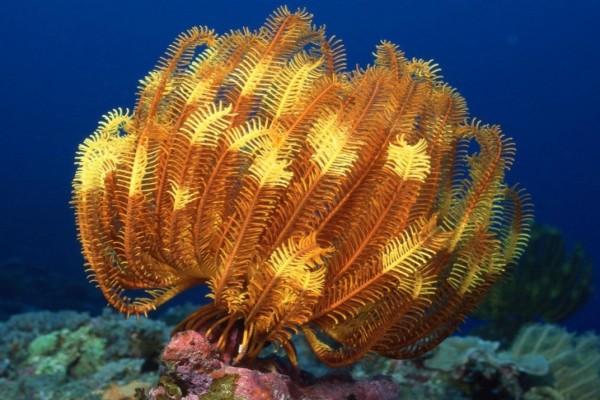 Una planta marina