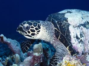 Una gran tortuga en el fondo del océano