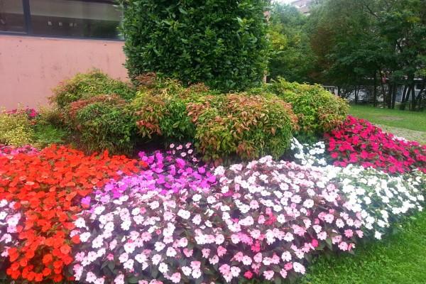 Composición floral en un jardín