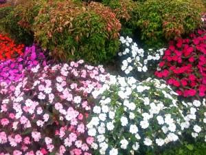 Plantas y flores de varios colores