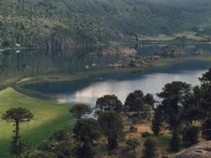 Lago Pulmarí rodeado de araucarias (provincia del Neuquén, Argentina)