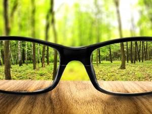 Observando el bosque a través de unas gafas