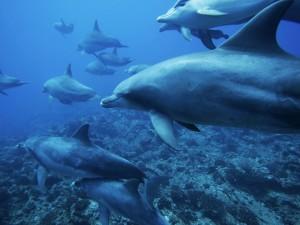 Postal: Grupo de delfines nadando en el océano