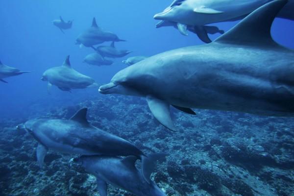 Grupo de delfines nadando en el océano