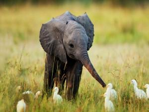 Postal: Aves junto al pequeño elefante