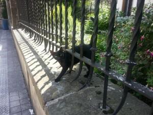 Un gato negro saliendo por la verja