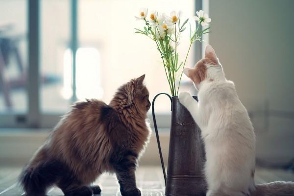 Dos gatitos curiosos