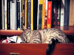 Postal: Un gato durmiendo en un cajón