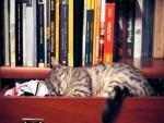 Un gato durmiendo en un cajón